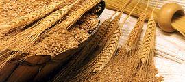 «Биосистема» планирует построить комплекс переработки зерна стоимостью 14 млрд рублей