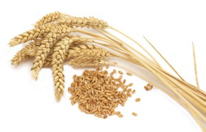 Россию засеют ГМО