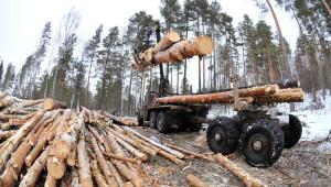 В Тверской области будут переводить котельные на биотопливо