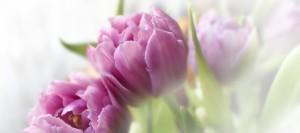 Поздравляем с праздником весны и красоты!