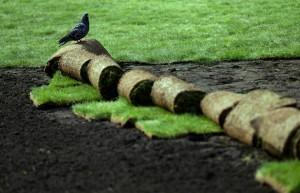 Ученые разобьют газон, генерирующий электричество