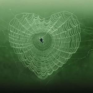 Полноценная сердечная ткань из паутины