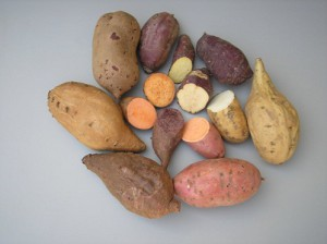 Горизонтальная передача генов:  сладкий картофель генетически модифицирован природой