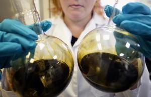 Открыт новый вид бактерий, переваривающих нефтяные отходы до органического грунта