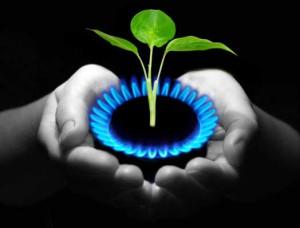 Разработчики НИИ биологии и биофизики предложили новую технологию переработки органических отходов в биогаз