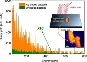 Ученые превратили бактерий в чрезвычайно яркий источник рентгеновского излучения