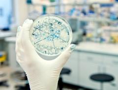 Биологи объединили несколько разных микробов в «биокомпьютер»