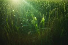 Аграрные биотехнологии прорастут в «Сколково»