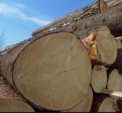 Компании из Нидерландов и РФ построят в поморье комплекс по переработке древесины за 3,5 млрд