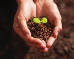Ульяновские ученые научились получать по 10 тысяч саженцев от одного растения