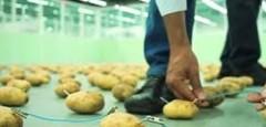 Картофельные биогенераторы в пищевой промышленности