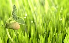 Monsanto внедряет программу производства сельхозкультур с нейтральным показателем высвобождения углерода