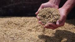 Путин рассчитывает, что цены на зерно будут стабильны