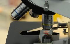 Нижегородские ученые разработали гель, останавливающий кровь менее чем за минуту