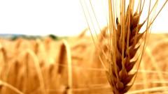 Tech Days AGRO: запрос на инновации в агроиндустрии  22.09.2016