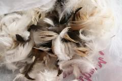 КемТИПП получит 170 млн на производство биодобавок из куриных перьев