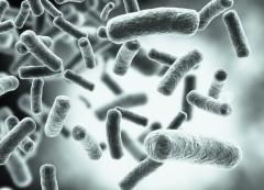 Ученые обнаружили безошибочно определяющие время смерти микробные часы