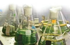 Водород вместо бензина: Самарские ученые извлекают энергию из биомассы