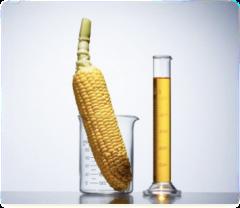 В китайской провинции Хэйлунцзян запретили выращивать ГМО
