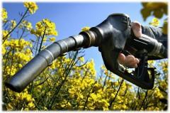 Новый штамм дрожжей поможет в производстве биотоплива