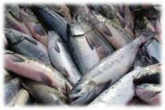 В Абу-Даби будут получать топливо при выращивании рыбы