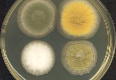 Малоисследованный кишечный грибок травоядных эффективно разлагает биомассу