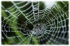 Российские и шведские ученые разработали биокомпозиты на основе паутины