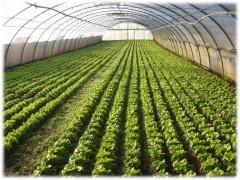 От семечка до прилавка: принят новый Национальный стандарт на органическое сельское хозяйство