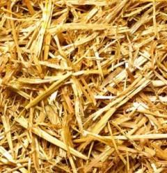 Биоэтанол из останков водорослей впервые используется в качестве чистящего средства