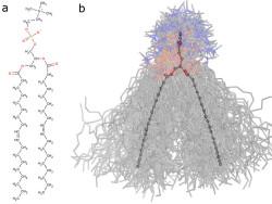 Биофизики из РФ научились предсказывать, как яды действуют на клетки