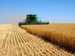 Сельское хозяйство признано крупнейшим загрязнителем воздуха
