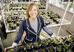 Удобрение влияет на геном растений