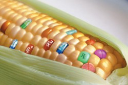 Госдума запретила выращивать в РФ генно-модифицированные растения и животных