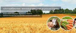 На конференции «Алтайбиотех-2016» обсудили результаты первого этапа промышленных испытаний биопрепаратов для животноводства