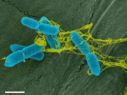 Война у корней дерева: патогены против ДНК