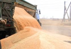 В Омске хотят возвести завод по производству аминокислот на основе глубокой переработки зерна