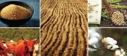 Прогноз «Сельскохозяйственные перспективы» на 2015-2024 от OECD