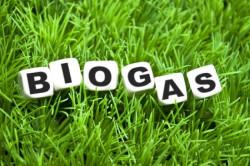 Компания «Альтэнерго», владеющая биотопливным комплексом «Лучки», апробирует биодобавку.