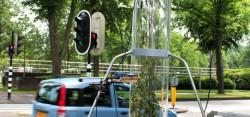 Голландские учёные вырастили специальные растения для снижения уровня загрязнения