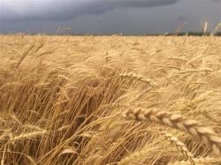 Программу по техническому развитию агропрома утвердят до конца года