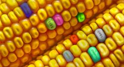 Россия теряет гигантский рынок генно-модифицированных растений из-за отечественных лоббистов и массовых страхов