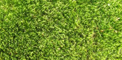 Солнечные панели из травы