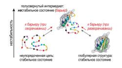 Белки сравнили со Вселенной. Почему белковая цепь находит единственно верную укладку среди многих вариантов