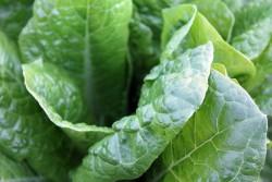 Био-фото-электро-химическая установка позволяет получать водородное топливо из листьев шпината и солнечного света