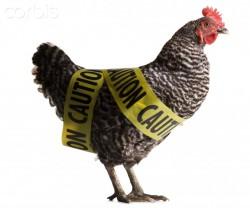 Сокращение применения антибиотиков в птицеводстве и ветеринарии