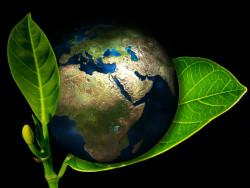 Российский бизнес вкладывается в зеленую химию