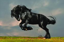 В Омской области запустили уникальное производство кормов для лошадей