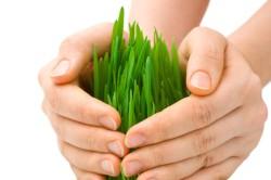 НСА: Агрострахование должно стать отдельным направлением господдержки