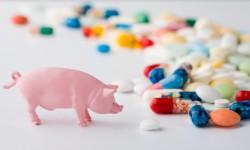 Российские ученые завершают создание отечественных кормовых антибиотиков