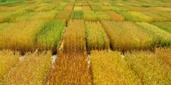 В стране появился миф о расцвете сельского хозяйства